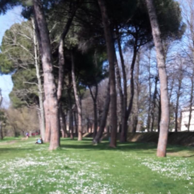 Primavera alle piagge