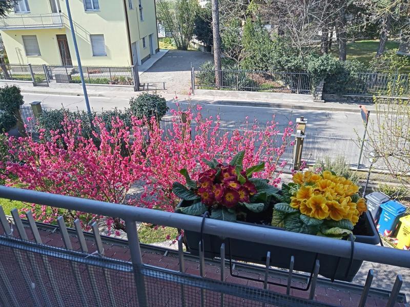 Che spettacolo la primavera