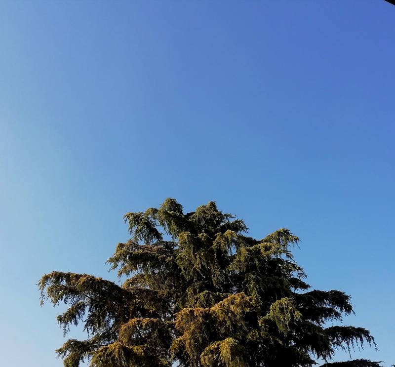 Quante volte ho guardato al cieloquante volte avrei preso il volo
