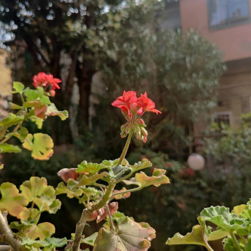Foto Meteo: Sboccia La Primavera A Bologna « 3B Meteo
