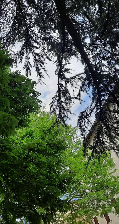 Sereno sotto gli alberi