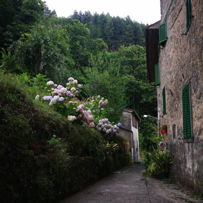 Localita' castrognano frazione di Pescia